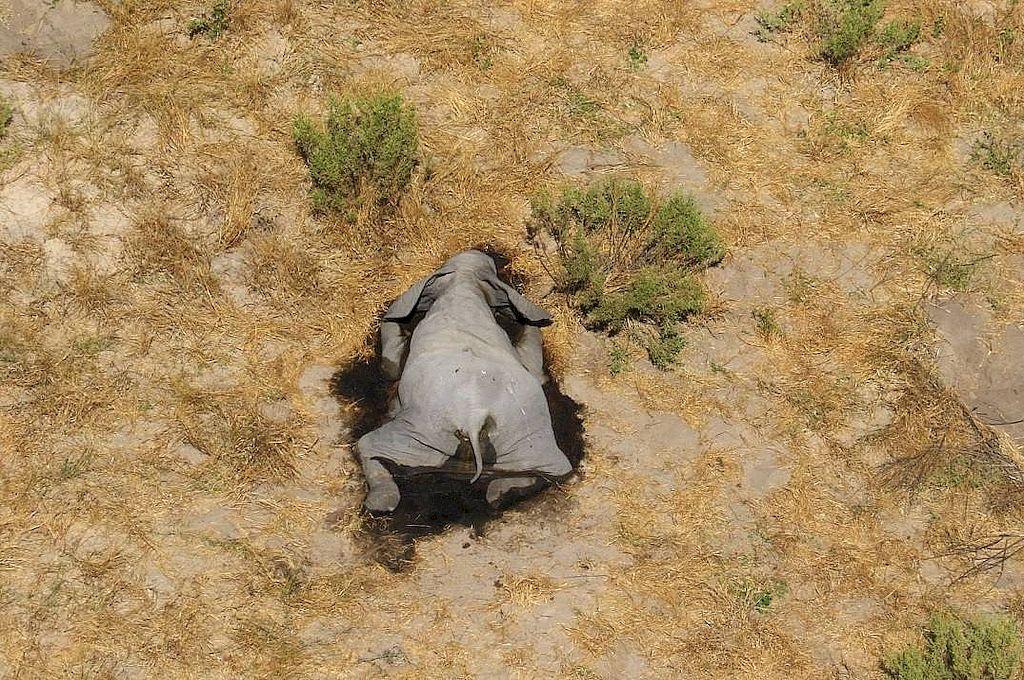 Masiva muerte de más de 350 elefantes — Misterio en Botswana