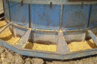 El maíz y su relación con la carne