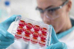 Científicos descubren una técnica para conseguir células madre más eficientes en medicina