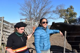 Robaron 22 vacas de un campo en Arteaga