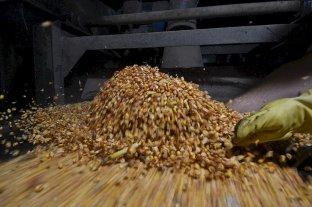 Récord en exportación de maíz