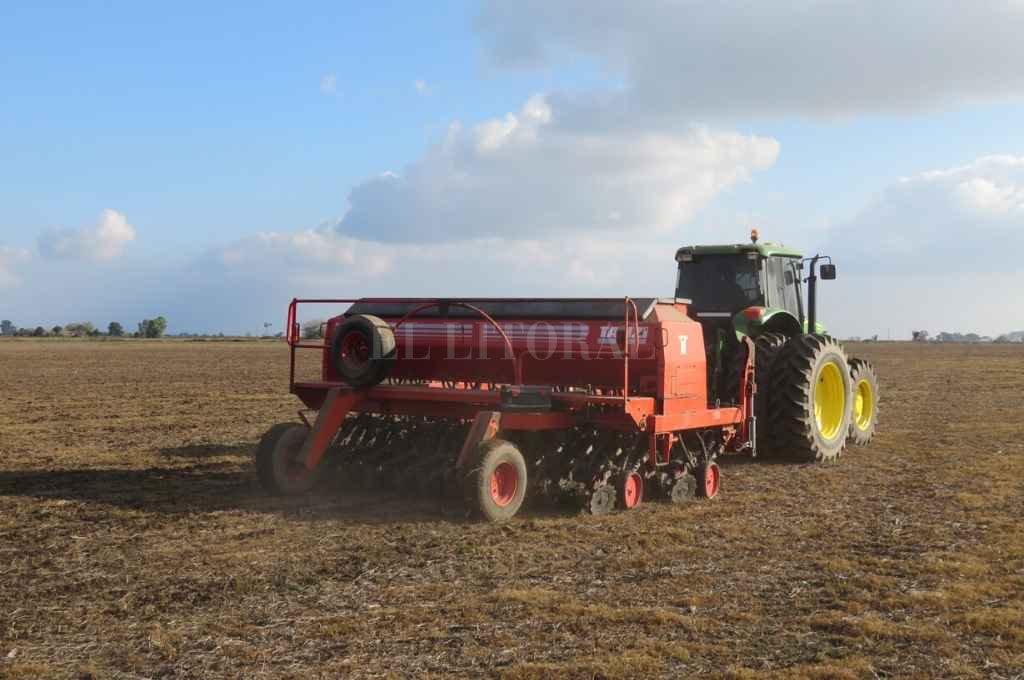 Los planes de siembra se vieron reducidos por la falta de lluvias en los últimos días en el norte y oeste del área agrícola.    Crédito: Federico Aguer