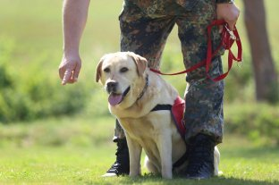 Alemania entrena perros para detectar coronavirus