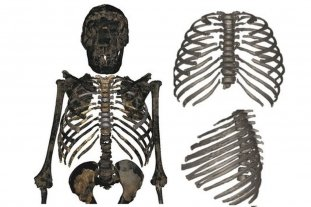 Una reconstrucción 3D revela la verdadera apariencia del Homo erectus -  -
