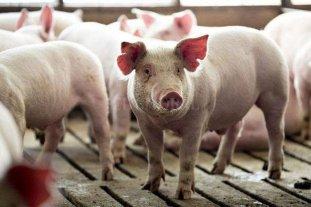 Los cerdos ya tienen precio de referencia