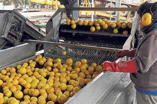 Definen exportaciones de limones a la UE