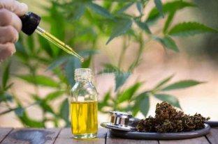 Cannabis terapéutico en agenda local: autocultivo registrado y con licencia - El autocultivo personal de cannabis sativa para tratar pacientes con enfermedades graves y crónicas se metió de lleno en la agenda legislativa del Concejo santafesino.    -