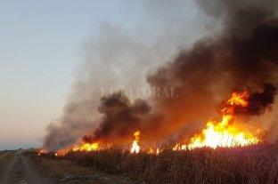 Denuncian la quema intencional de un campo  -  -