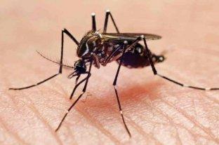 Corrientes: se detectaron cuatro nuevos casos de dengue