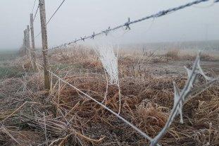 Fuertes heladas en el centro sur santafesino pero sin efectos en la producción