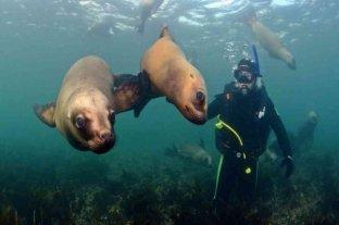 Puerto Madryn desarrollará un Parque Acuático Submarino para fomentar el buceo