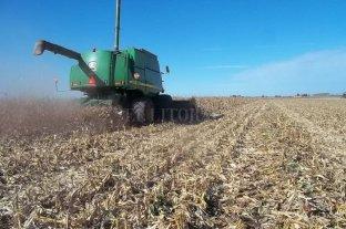 El ambiente seco permitió el avance de la cosecha de maíz tardío