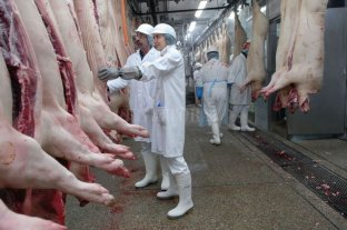 El sector porcino entrerriano pide no parar la actividad en frigoríficos por casos de COVID-19