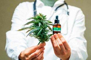 Misiones: un laboratorio estatal fabricará aceite de Cannabis para uso medicinal