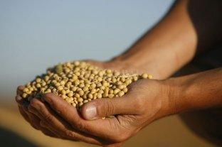 Caídas en la soja y el maíz en Rosario, en una jornada con poca actividad