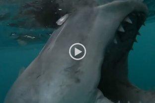 Video: Pescaban tranquilamente y un enorme tiburón blanco mordió el motor de su bote