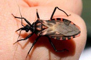 Chagas: una enfermedad que crece y cuyos datos son preocupantes
