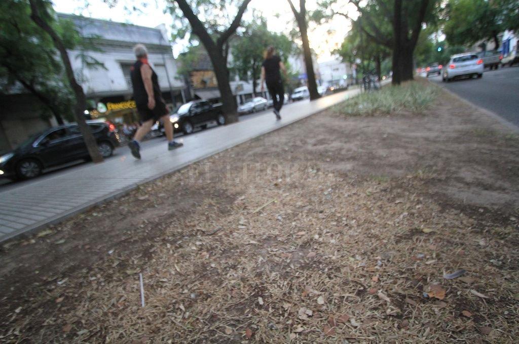Pasaba sus tardes caminando con su perro, en la zona lindera a la cancha, al oeste de la ciudad. Una vez por semana desviaba para encontrarlo en el cantero central. Crédito: Pablo Aguirre
