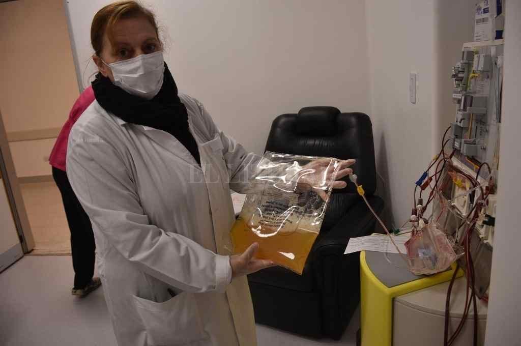 El plasma extraído por aféresis a pacientes recuperados de Covid-19 se utiliza para tratar a otros que están cursando esa enfermedad.    Crédito: Flavio Raina