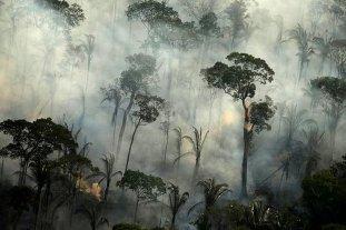 Brasil dejará de combatir la deforestación del Amazonas