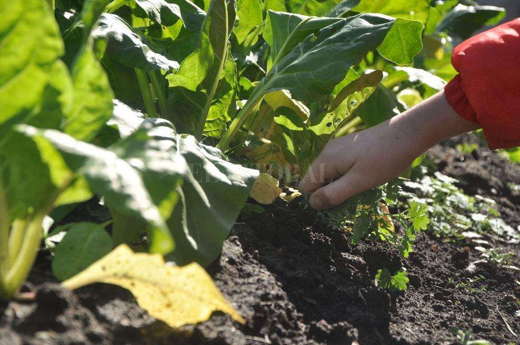 Cultivos en casa. Miles de santafesinos se inclinan hacia la producción de sus propias verduras. En Sauce Viejo, Susana y Luciana tienen un extenso terreno para aprovechar y sembrar.  Crédito: Mauricio Garín