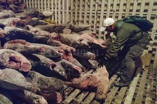 China prohíbe a su flota pesquera faenar cerca de Galápagos