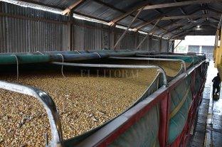 Por primera vez en 20 años la cosecha de maíz superó a la de soja