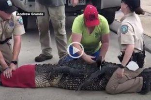Video: detuvieron a un enorme caimán que se acercó a una nena en Texas