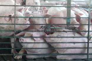 Un acuerdo con China avala el récord de exportación de cerdos