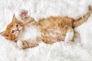 Día Internacional del Gato, uno de los animales más populares del mundo