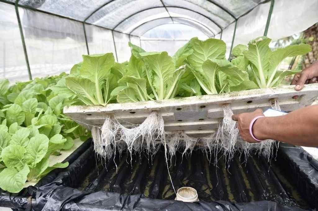 Técnica. Los vegetales crecen sobre la
