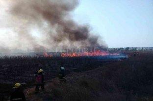 La justicia federal investiga los incendios en el norte santafesino -  -