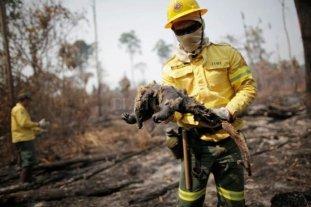 Miles de incendios vuelven a azotar la Amazonía brasileña