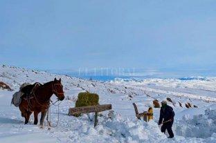 Declararon la emergencia agropecuaria en Río Negro y Neuquén