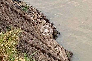 Video: apareció un lobito de río en la Laguna Setúbal -