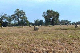 Chaco: se estiman pérdidas en la producción agropecuaria por la grave sequía