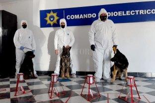 """La novedosa pericia que complicó al acusado de matar a Julieta Del Pino - Los peritos, acompañados de sus canes especialmente adiestrados, """"Tacher"""", """"Lupo"""" y """"Rufus"""". -"""