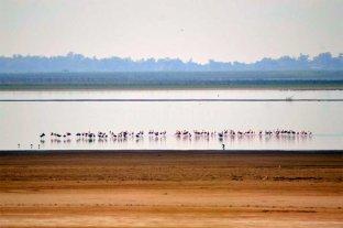 """Sin """"moros en la costa"""", volvieron los flamencos a la Laguna Setúbal -  -"""