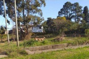 Un ciervo sosprendió a los vecinos de Concordia