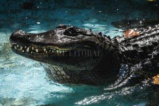 El cocodrilo cautivo más viejo del mundo cumple 83 años