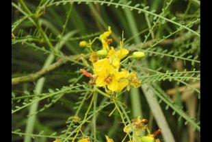 Volver la mirada hacia la flora autóctona