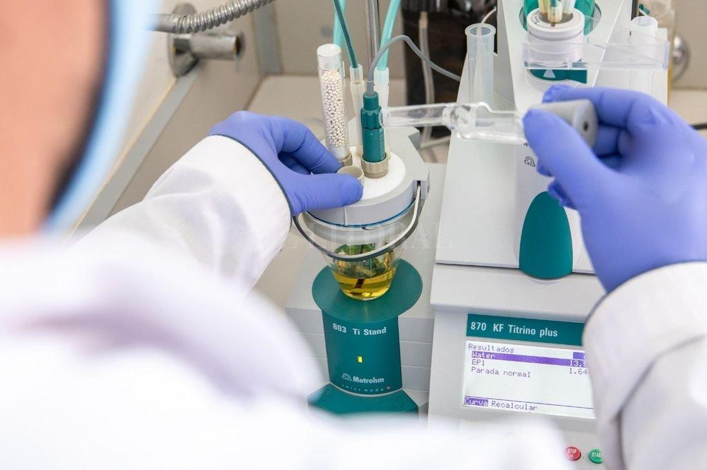 """Estudios realizados determinaron que las plantas de cannabis producen al menos 90 compuestos conocidos como """"cannabinoides"""" que pueden encontrarse en distintas cantidades y proporciones en los productos destinados al uso terapéutico. Crédito: Gentileza"""