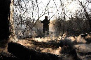 """""""Nuestros ecosistemas no soportan más destrucción"""", advierte una experta"""