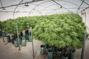 Frederic se reunió con el presidente de una empresa estatal de derivados medicinales del cannabis