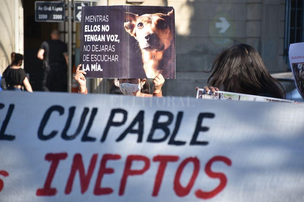 Manifestantes en defensa de los animales. Crédito: Manuel Fabatia