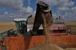 Las exportaciones primarias repuntaron en Santa Fe en los primeros siete meses del año -  -