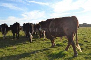 En Santa Fe hay casi un 40% menos de establecimientos ganaderos