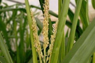 Jornada con baja de los precios de la soja y el trigo