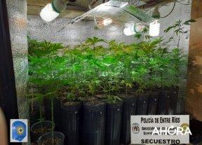 Hallaron un invernadero de marihuana en Paraná