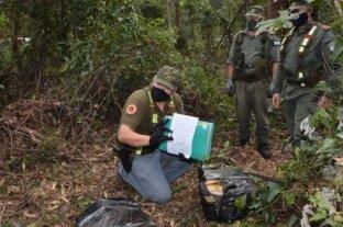 Secuestran 228 kilos de marihuana en la selva misionera